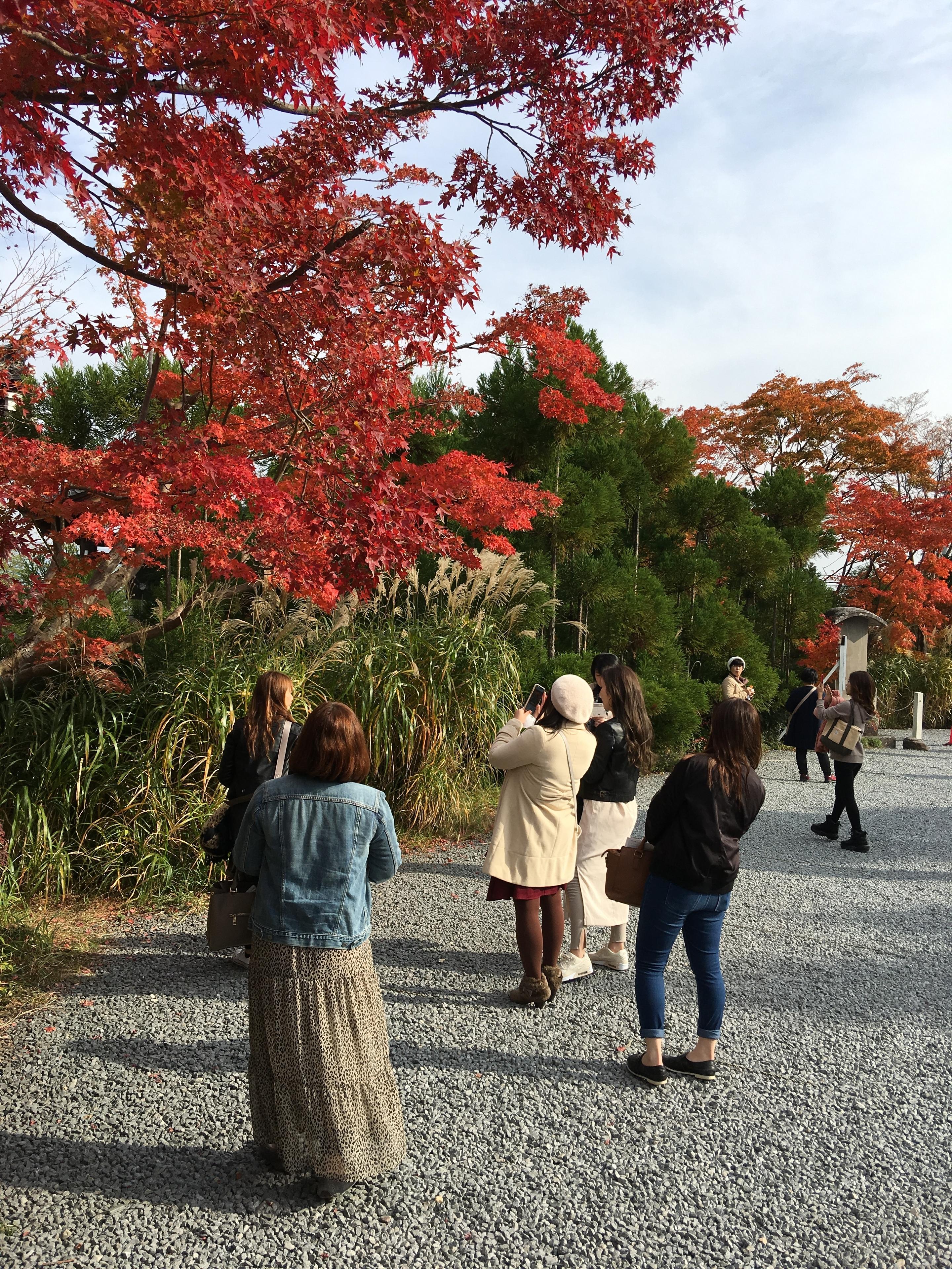 紅葉の写真1